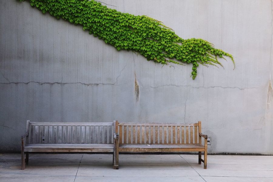 Bench Plant No People