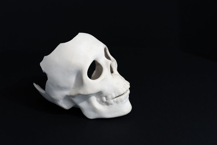 Close-up of white animal skull against black background