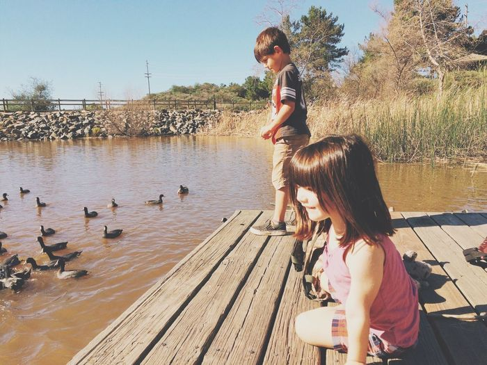 Sibling on jetty with coots in pond