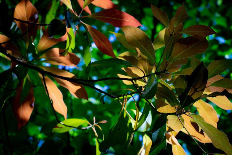 sommer leaves