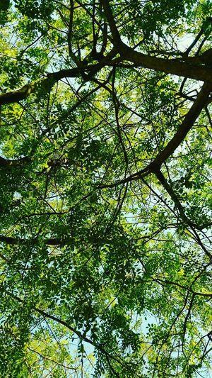 Mind map Tree Nature Green Color Mindmap Backgrounds Leaf Sky Growth Mind