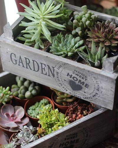 Моя радость ❤ Succulents Plant Garden Flowertida