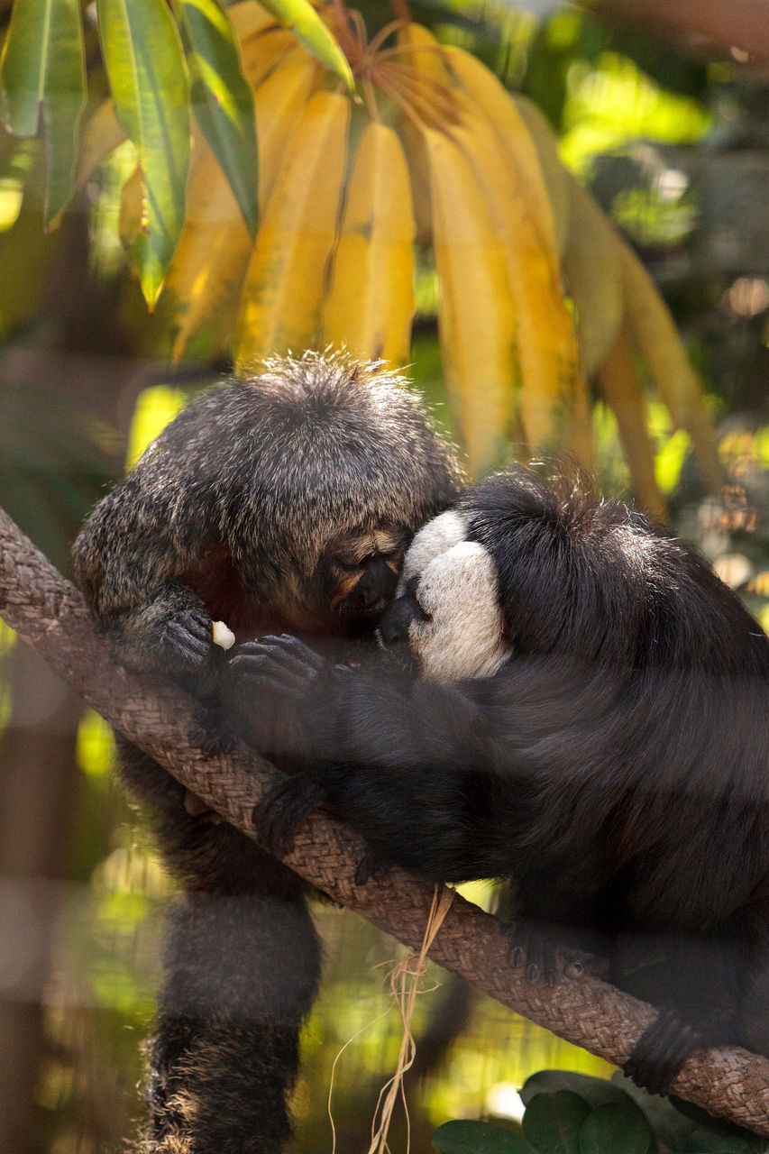 Howler Monkeys Sitting On Branch At Zoo