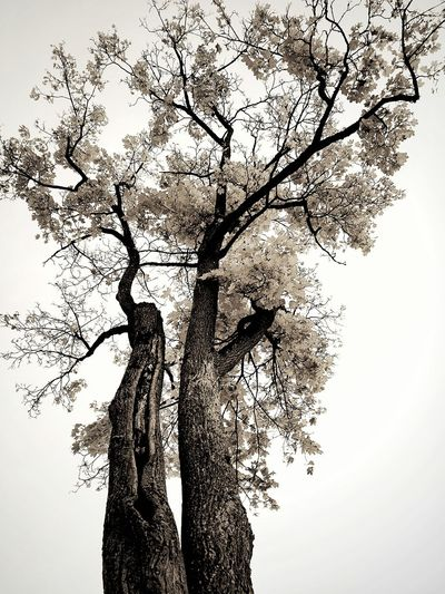 Sky No People Nature Silhouette Tree Outdoors Day Tranquility Leaves Branches And Leaves Branches Tree Trunk Tree_collection  Blackandwhite Blackandwhite Photography Black And White Photography Black And White Collection  Autumn Autumn Leaves Autumn Collection