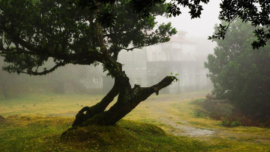 Tree trunk in foggy weather