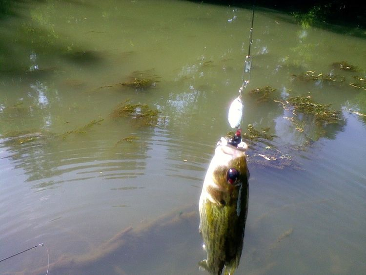 Fish Fishing Fishing Season Fishing Time Leisure Activity Nature Outdoors Stream Fishing Water First Fish Sons First Fish light and reflection Pet Portraits