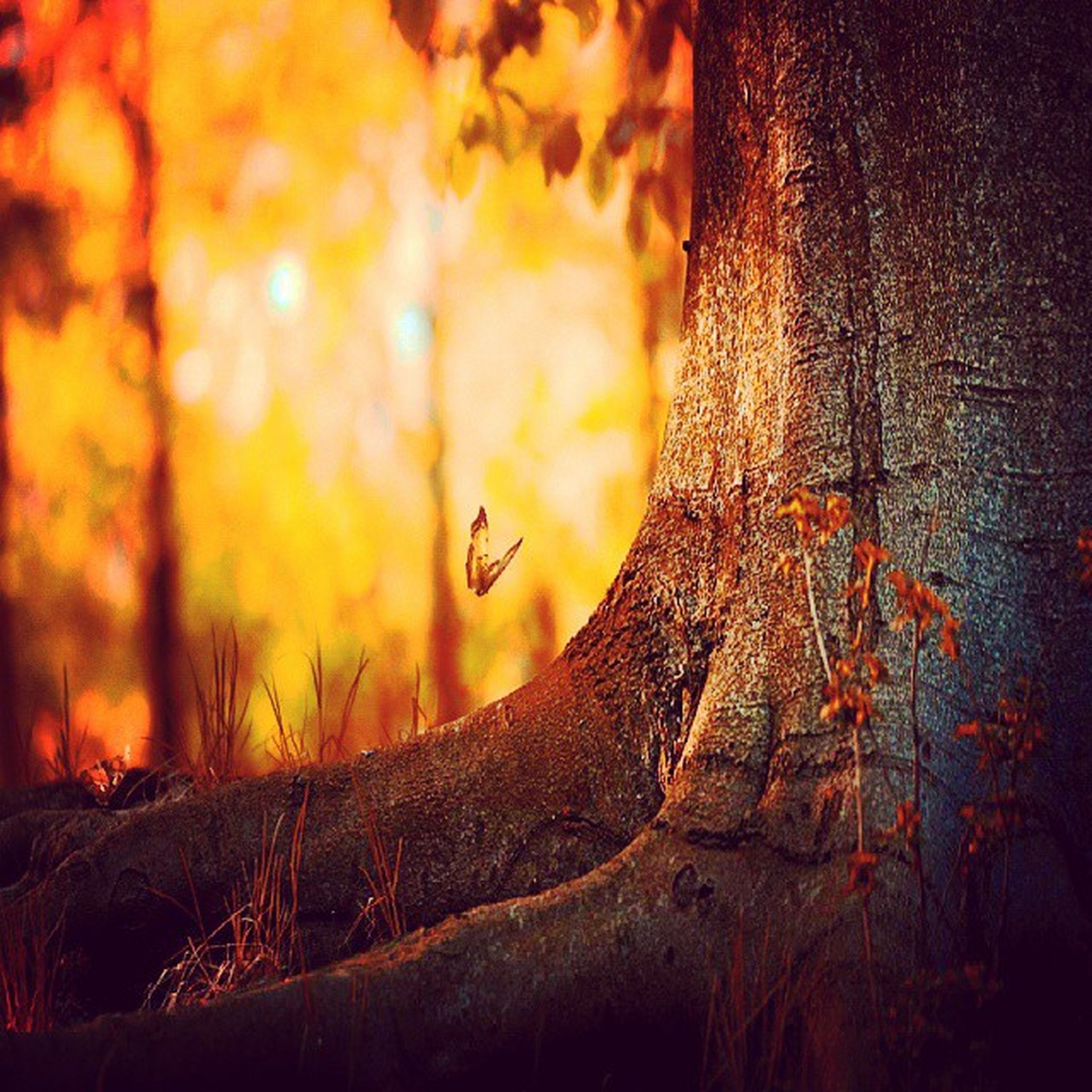 close-up, orange color, focus on foreground, nature, dry, outdoors, tree, forest, textured, auto post production filter, yellow, selective focus, tree trunk, sunset, day, autumn, part of, sunlight