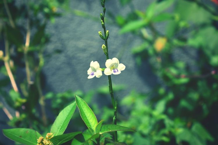 flowers also happy Flowerwhite Flora Niceflowers Flower Leaf Close-up Plant Green Color Butterfly - Insect Flowering Plant
