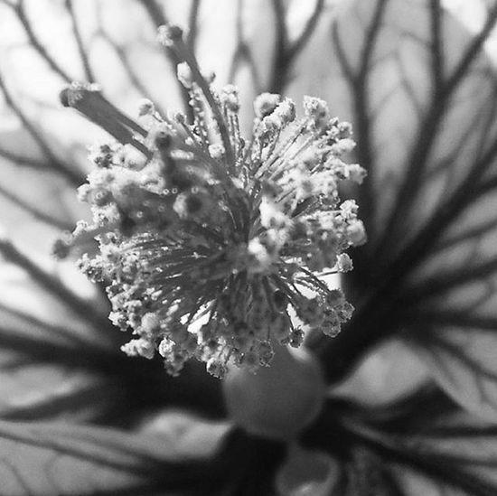 Butilon heart 💚Flower Black And White