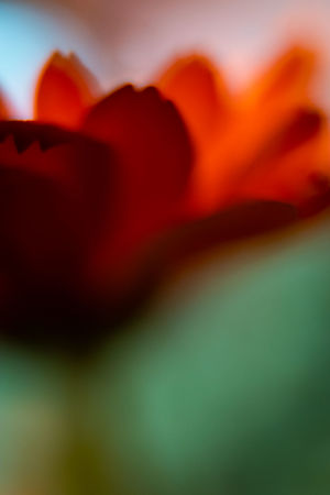 Abstract Photography Beautiful Nature Calmness Colours Macro Beauty Macro Photography Tranquility Abstract Abstractart Backgrounds Beauty In Nature Beauty In Nature Blurred Motion Close-up Colorful Flower Flower Collection Full Frame Macro Macro_collection Macro_flower Nature No People Plant Red