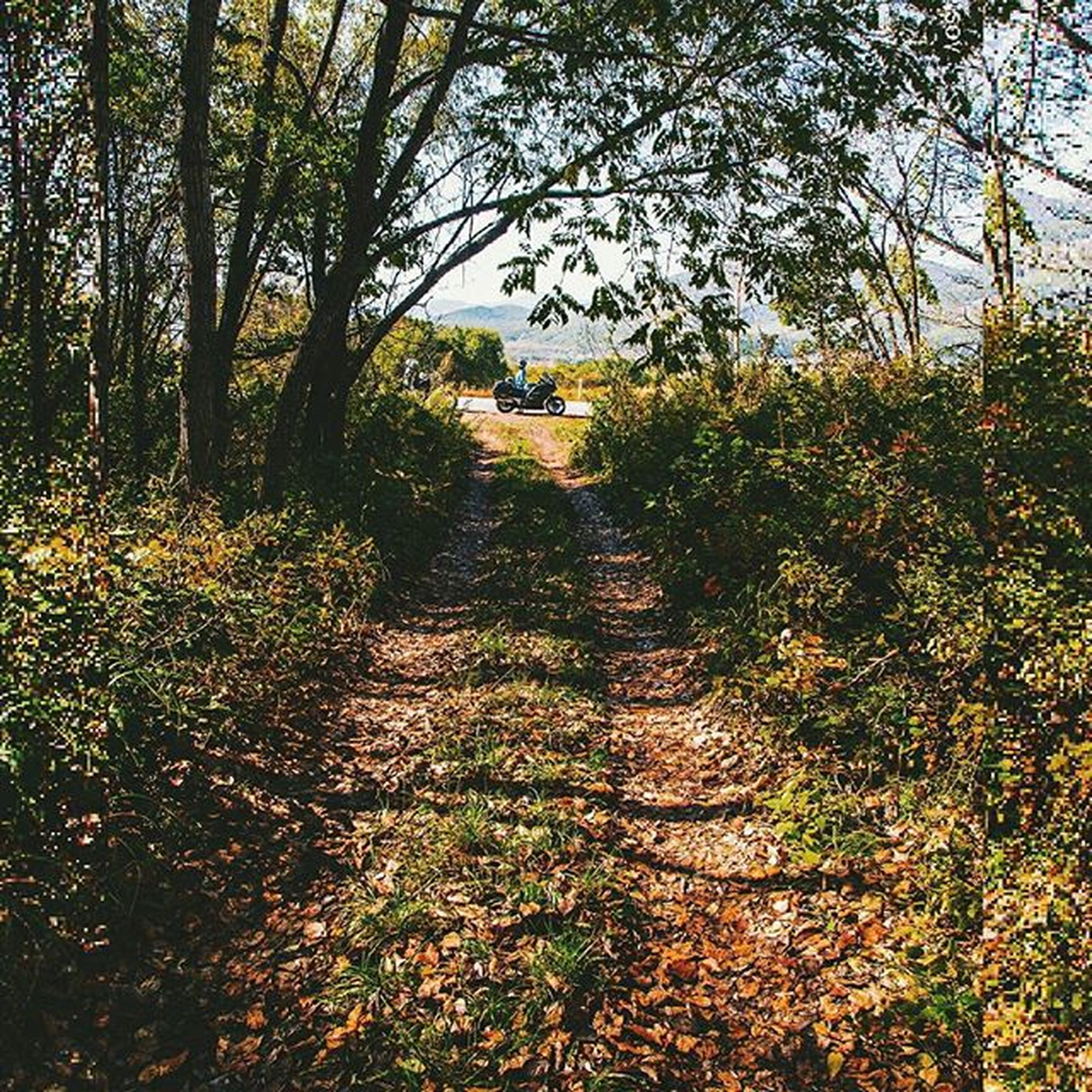 tree, the way forward, growth, dirt road, tranquility, footpath, nature, diminishing perspective, pathway, tranquil scene, plant, beauty in nature, vanishing point, branch, sunlight, walkway, outdoors, narrow, scenics, day
