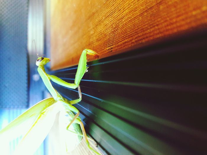 Grasshopper Close-up Insect Indoors  Plant Green Color Freshness Growth Wooden Beauty In Nature Overhead View Natural Condition Wood - Material Green Color Freshness Wood Day Outdoors Vanishing Point Abundance Flower Nature Fragility No People Focus On Foreground