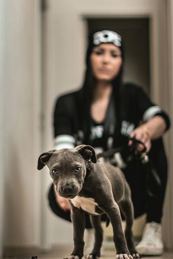 Black dog holding mask
