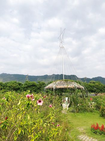The Bloom Thailand Plant Sky Cloud - Sky Flower Flowering Plant Nature Growth Beauty In Nature No People Day Freshness Field Outdoors Grass Flowerbed Tranquility