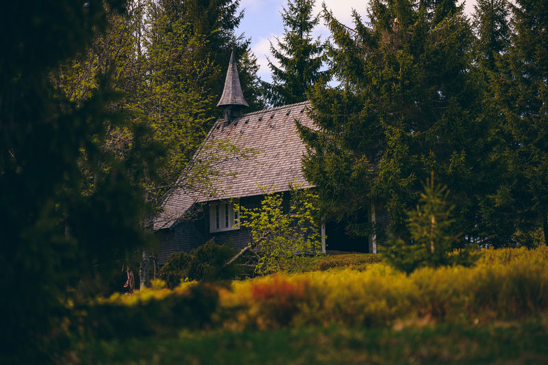 House amidst trees and plants on field