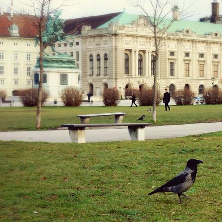 Love those birds 💚 Heldenplatz WienAnimal Photography Birds_collection Urban Landscape Palace Hofburgpalace Showcase: January Vienna Austrianphotographers Cityscapes Bird Photography Urban Photography Urban Nature Street Photography Heldenplatz Animals Here Belongs To Me