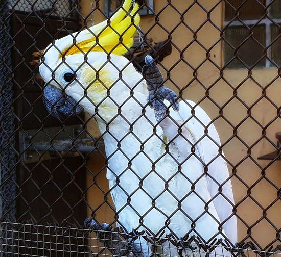 Fence Grid Bird