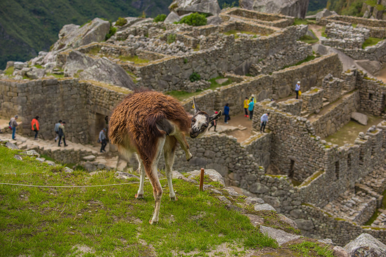 mammal, livestock, ancient, nature, travel, mountain, land, built structure, day, architecture, history, people, incidental people, animal wildlife, old ruin, one animal, men, domestic animals, outdoors, archaeology, ancient civilization