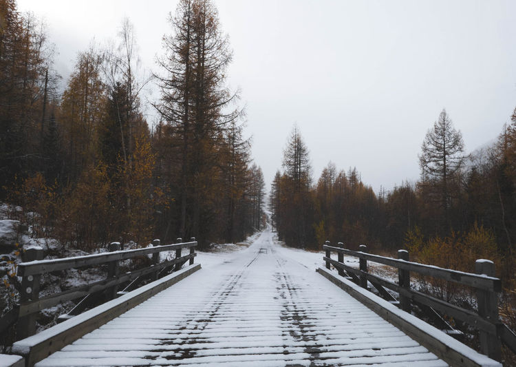 Autumn Colors Beauty In Nature Bridge Cold Temperature Forest Forest Photography Forestwalk Hiking Landscape Landscape_photography Lötschental Nature Nature No People Outdoors Snow Tree Winter Winter