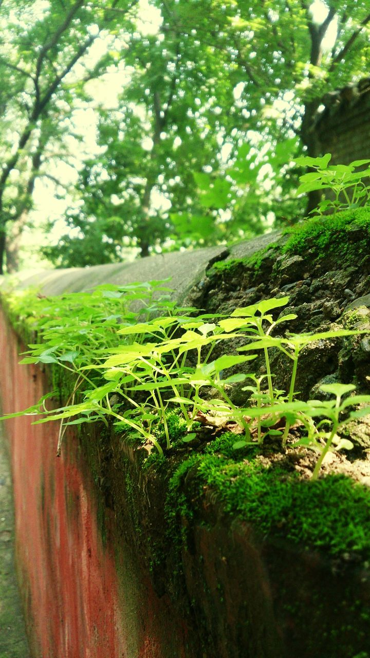 growth, nature, plant, day, outdoors, no people, tree, green color, beauty in nature, tranquility, scenics, close-up, freshness