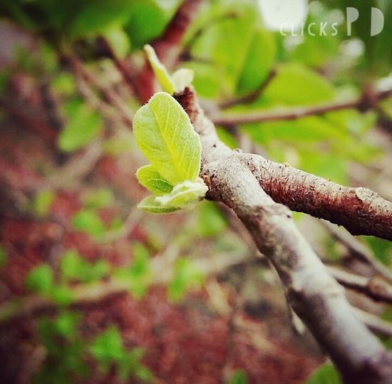Green Rainyclick New Beginnings Guava  Mst EyeEm Nature Lover Eye Around The World The Eyeem Award 2016 Showcase July 2016 Showcase July Clicked By Redmi 2 Fan Of Huawei P9 Eyeem Philippines Getty Images