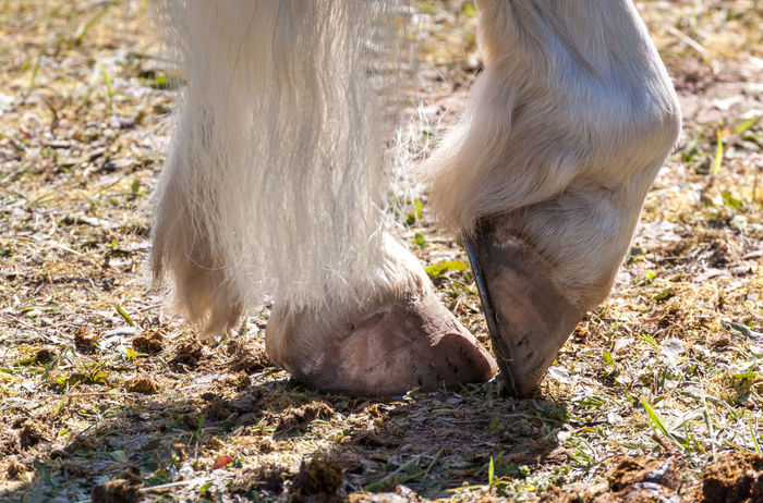 Animal Body Part Animal Themes Beauty In Nature Close-up Competition Nature's Diversities Entspannung Focus On Foreground Haflinger Hooves Horse Hufe Nature Outdoors Pferd Reiten Reitsport Relaxed Relaxed Atmosphere Relaxing Riding Selective Focus Summer Summertime Westernturnier