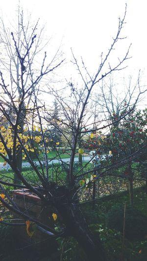 Autumn colors. Autumn Colors Goodphotography MadeinItaly