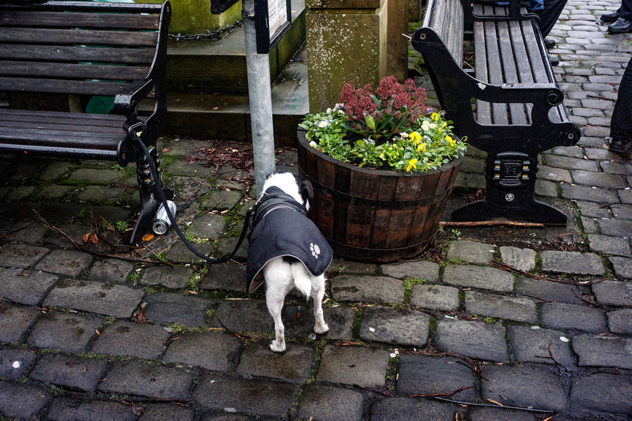 Market day at Skipton in Yorkshire. Dog tied up wearing coat. Cobblestone Streets Public Space Skipton Yorkshire Animal Themes Benches Cobblestone Day Dog Domestic Animals Flowers Growth Low Section Mammal No People One Animal Outdoors Pets Plant Seats