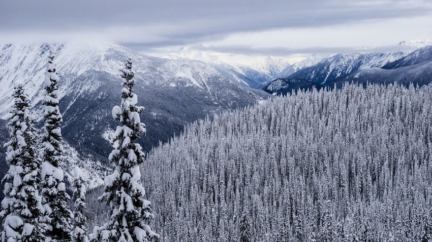 Aerial View Revelstoke Snowboarding Ski Wild Wilderness Resort Canada British Columbia Mountain Range Mountain Valhalla Snow Winter Cold Temperature Mountain Nature Day No People Beauty In Nature Outdoors Scenics Tree Shades Of Winter