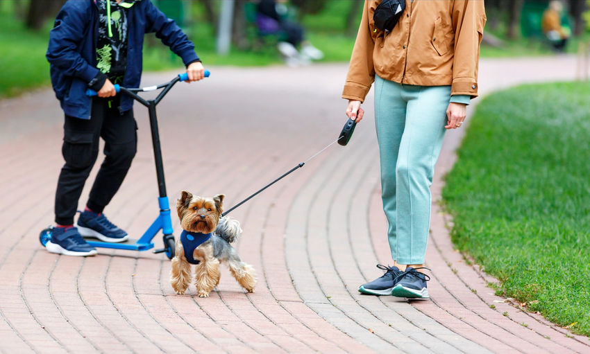 Low section of people with dog on footpath