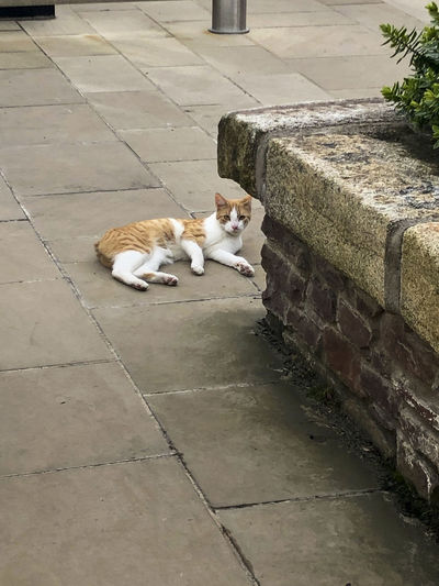 High angle view of cat sleeping on sidewalk