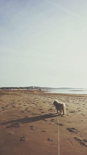 bello . Doggy Simplicity Enjoying Life