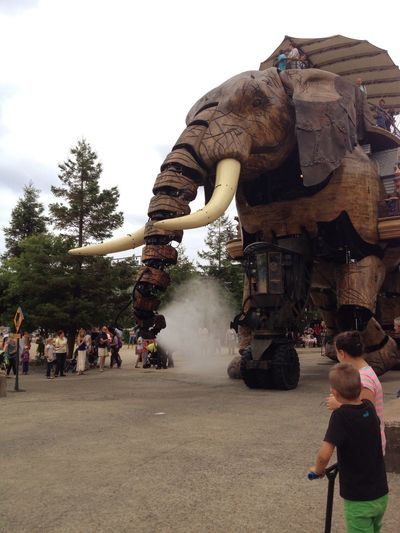 Nantes, France Elephant Learn And Shoot: Balancing Elements Photography In Motion