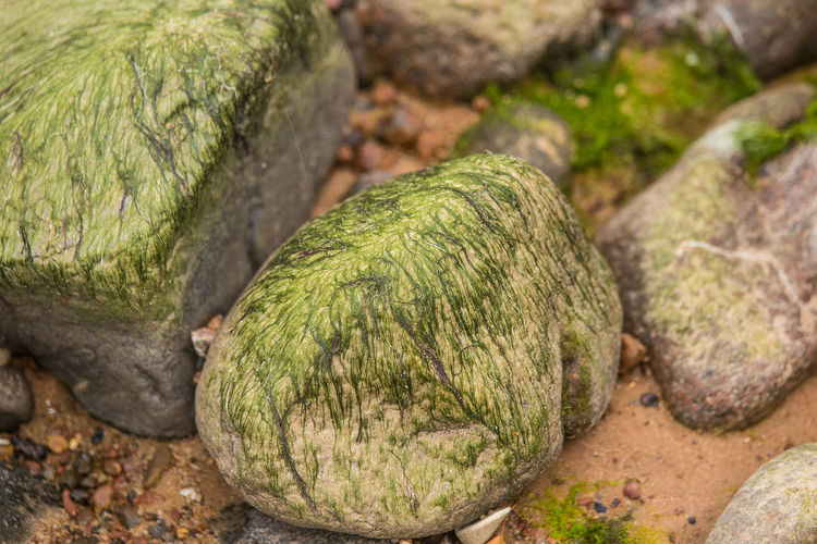 Close-up of pebbles on rock