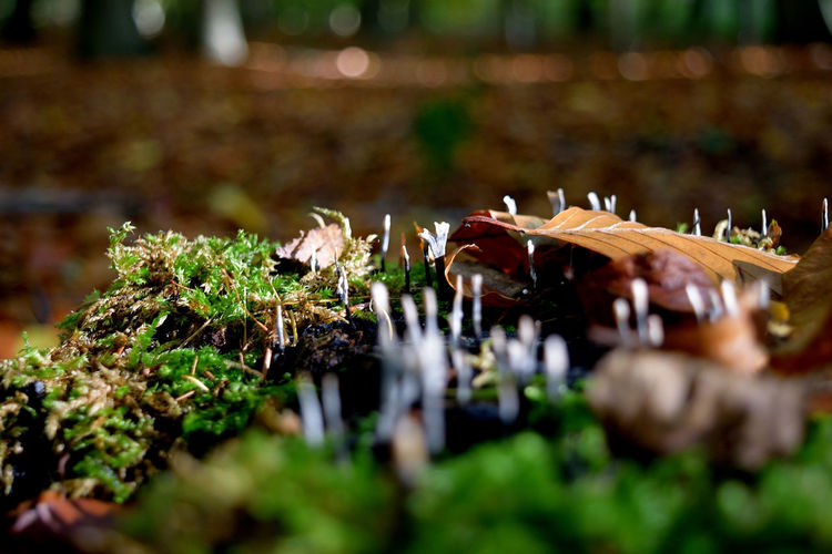 into the woods Freshness Into The Wild Mushrooms Perspectives On Nature Beauty In Nature Close-up Day Fragility Freshness Growth Into The Woods Leaf Light And Shadow Micro Life Mignon Moss Nature No People Outdoors Plant EyeEmNewHere