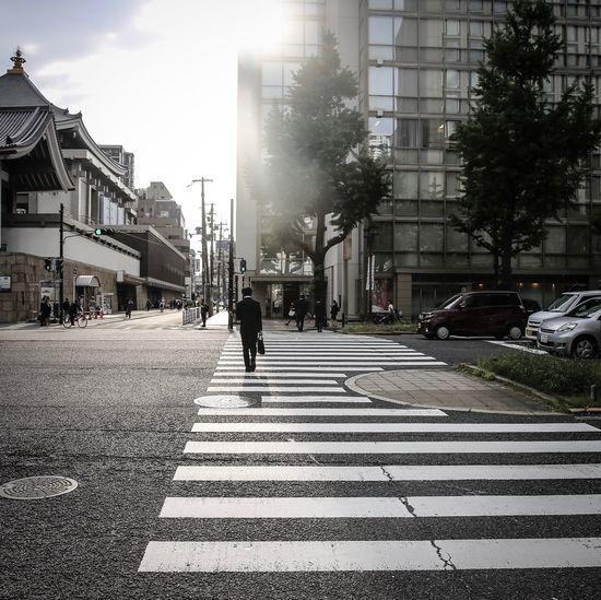Osaka Zebra