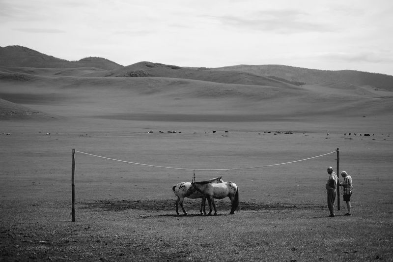 Mongolia Animal Animal Themes Black And White Day Domestic Animals Environment Herbivorous Horse Land Mountain Nature Nomadic Nomadic Life Outdoors Real People Scenics - Nature Steppe Монгол улс
