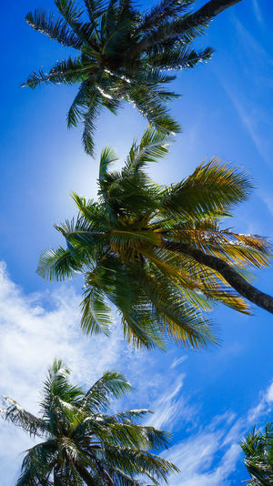 Nikon Nikonphotography Maldives Photooftheday Island Tropical Hudhuranfushi Freelance Life Bluesky Coconut Trees From My Point Of View