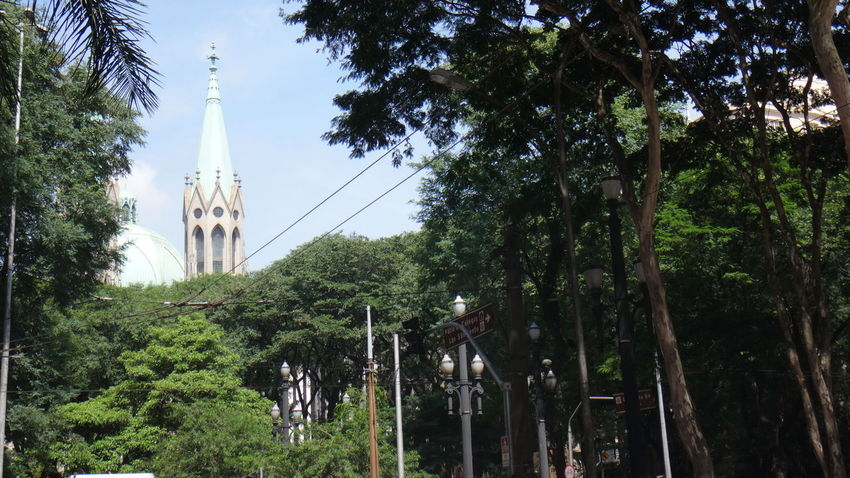 CAIXA CULTURAL PRACA DA SE SAO PAULO BRAZIL Architecture Branch Building Exterior Built Structure Clear Sky Connection EyeEm Team Forest Green Color Growth Low Angle View Nature Outdoors Palm Tree Sky Tall - High Tower Tranquility Travel Destinations Tree Tree Trunk