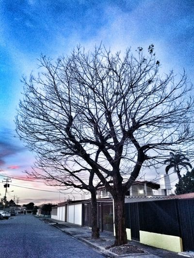 Hasta que al fin :) Taking Photos Take By Me :) Sky Collection Tree