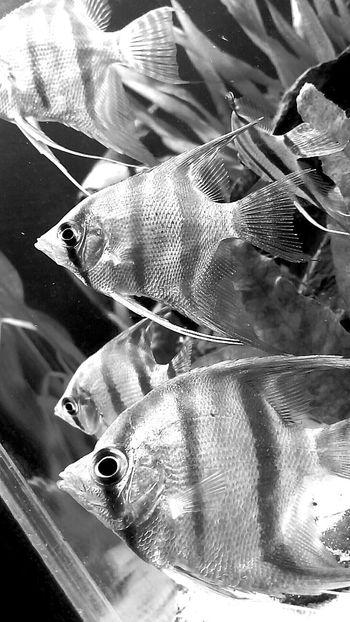 Aquarium FishEyeEm Delicious ♡ Beautiful !!!♥♥
