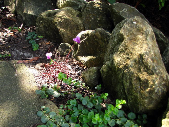Animal Animal Wildlife Animals In The Wild Beauty In Nature Day Flower Flowering Plant Growth High Angle View Land Moss Nature No People Outdoors Plant Rock Rock - Object Solid Stone Stone - Object