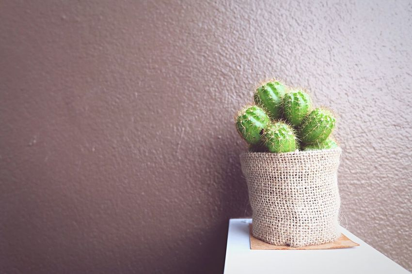 Cactus Indoors  Green Color No People Close-up Day Brownbackground Freshness Beauty In Nature Green Color Outdoors Plant Nature Growth