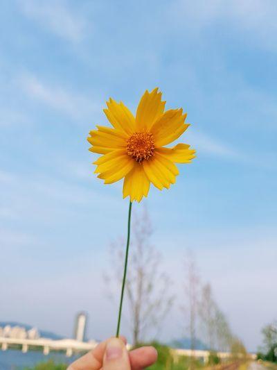 이름모를 들꽃&하늘 Flower Summer Yellow Day Sky Skyline Beautiful 양평 남한강 꽃 꽃스타그램 꽃스타그램🌸 노랑꽃 하늘 하늘맑음 Daily Daily Life 일상 데이트