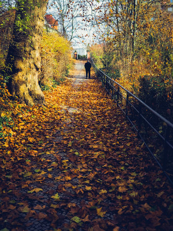 Autumn Autumn Change Tree Leaf Plant Part One Person Direction Walking Real People Nature The Way Forward Plant Full Length Day Leisure Activity Footpath Orange Color Rear View Men Outdoors Leaves Autumn Collection Fall