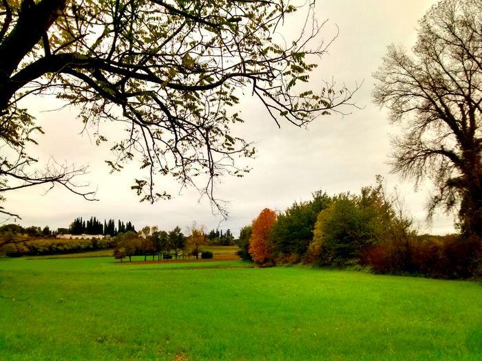 Colors. Tree
