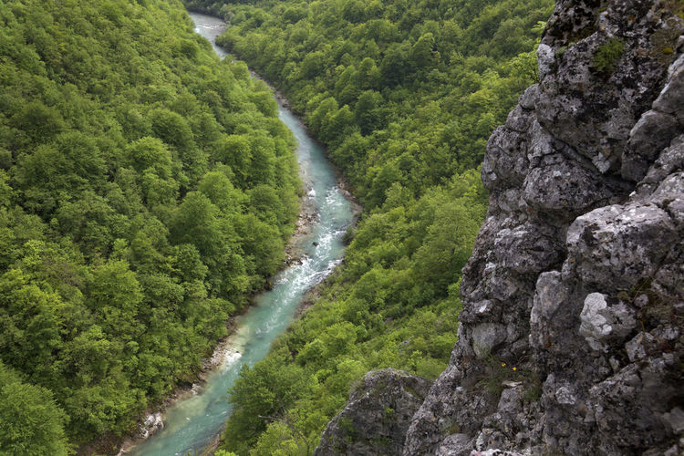 High angle view of stream amidst trees in forest