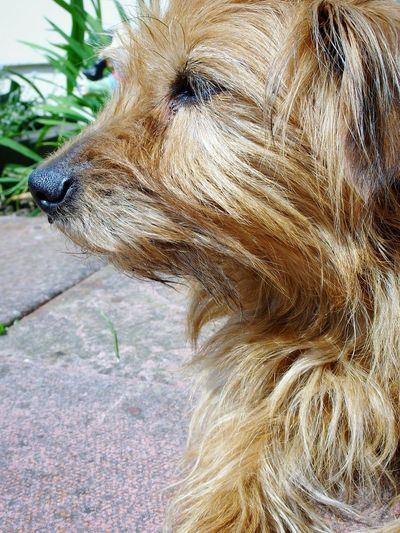 Maxi 🐕 One Animal Dog Animal Themes Pets Mammal Domestic Animals Close-up Day No People Outdoors Nature Dog Life Doggo Dogs Little Dog Lying Down Portrait Pet Cute Watchful Watchful Dog Animal Animal Head  Pet Portraits