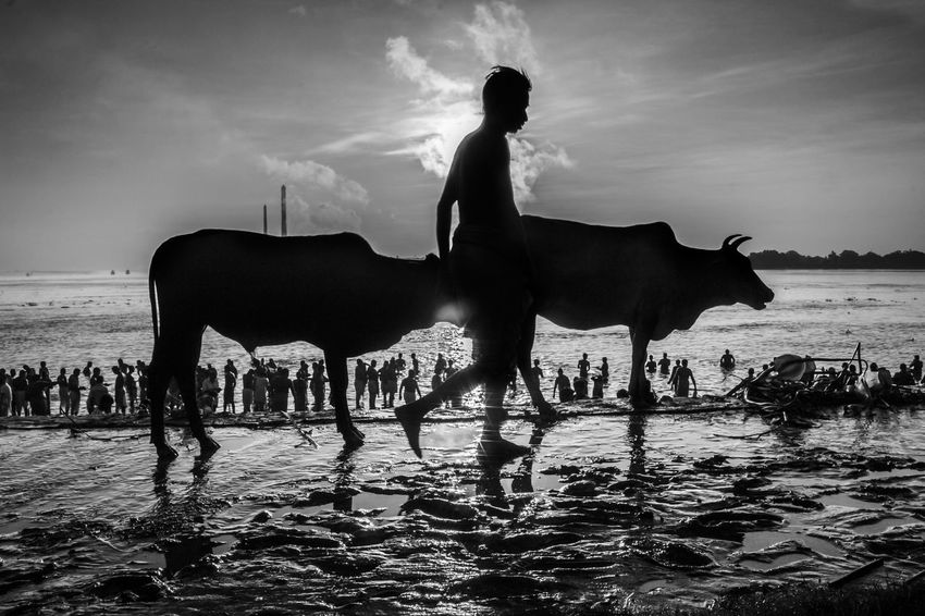Untitled 7 #blackandwhite #blackandwhitestreet #candid #conceptual #cow #India #intriguing #Legs #mahalaya #Morning #mystery #streetphotography #weird #wonder #wondersofindia Animal Themes Beauty In Nature Cloud - Sky Day Mammal Nature Outdoors Sky Togetherness Water