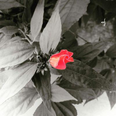 Curti Ai Natureza 🐦🌳 Boa Noite ✌❤ Mi Amor ♥ Mexico Mumuzinho Bom Dia ❤ First Eyeem Photo Secret Garden Avare SP BRASIL 🇧🇷☀️